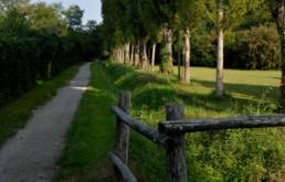 bosco viale
