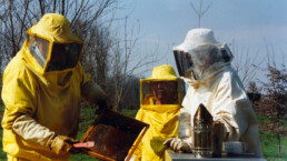 apiario