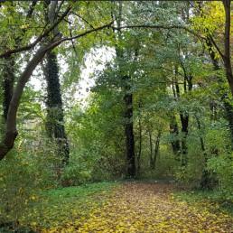 bosco autunno