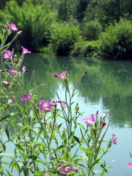 fiori e laghetto